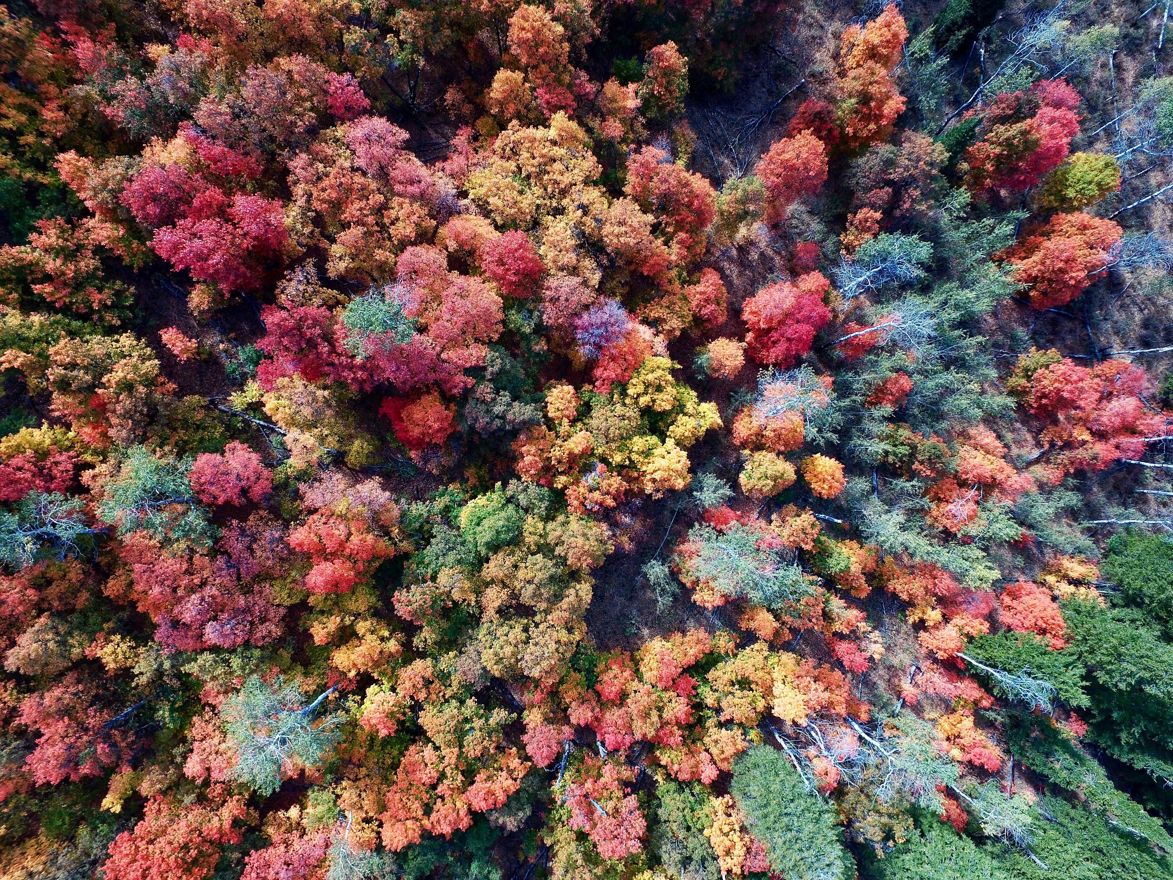 L'automne, au-delà des pommes!